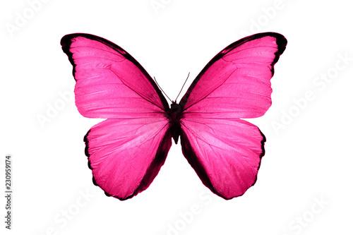 beautiful pink butterfly isolated on white background
