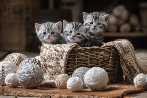Obraz na plátně Small striped kitten in the old basket