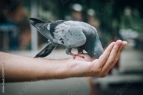 Young man feeding pigeons in city park