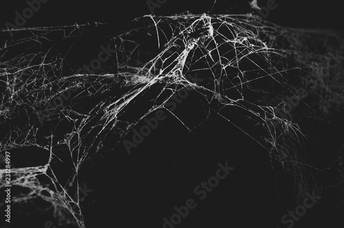 Obraz na plátně Spider web in the dark