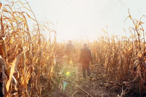 Father and son walking in dried corn stalks in a corn maze Fototapeta