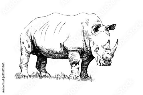 Fototapeta premium Rhino ręcznie rysowane ilustracje