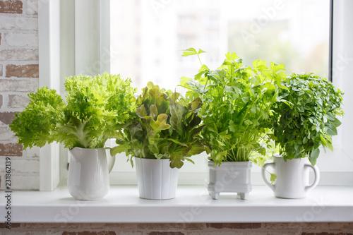 Fotografia Lettuce, leaf celery and small leaved basil