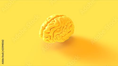 Fotografia Yellow Human brain Anatomical Model 3d illustration 3d rendering