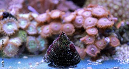 Saltwater snail reef tank