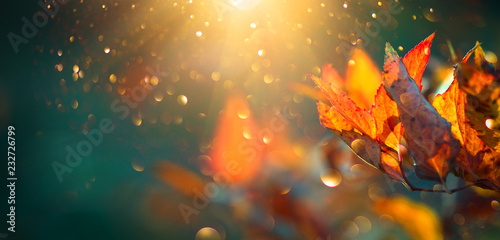 Autumn colorful bright leaves swinging in a tree in autumnal park. Autumn colorful background, fall backdrop