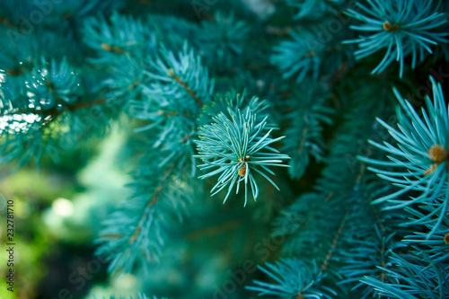 Macro shot of a Christmas tree