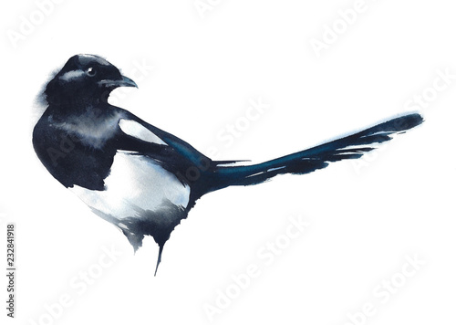 Canvas Print Bird  magpie black and white watercolor painting illustration isolated on white