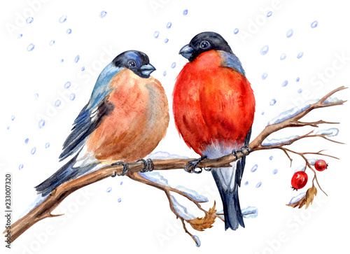 Foto Two bullfinches on a hawthorn branch under snowfall, watercolor painting on a white background isolated with clipping path
