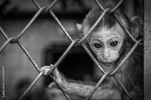 Valokuva Zoo