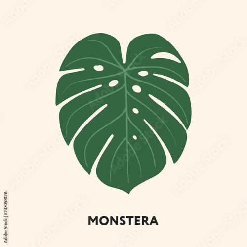 Carta da parati Monstera Tropical Jungle Plant Green Big Palm Leaf