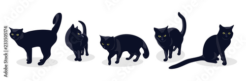 Fotografia Black cat in different poses, isolated on white background