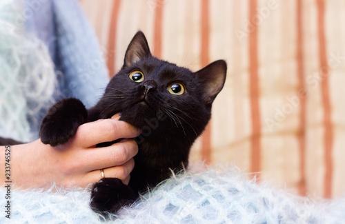 Cuadros en Lienzo black cat at home