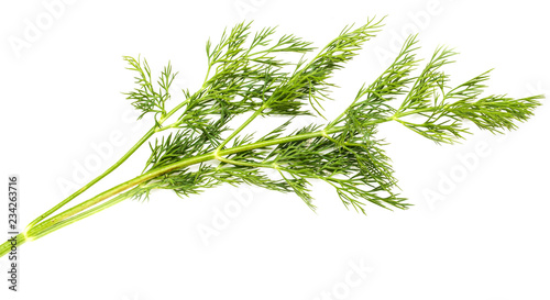 Photo Green leaves of dill on a white background