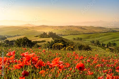 Fototapeta Poppy flower field in beautiful landscape scenery of Tuscany in Italy, Podere Be