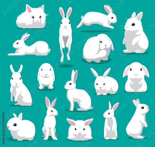 Fototapeta premium Ładny biały królik stwarza ilustracja kreskówka wektor