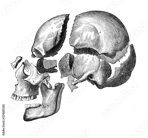 Leinwand Poster Vintage illustration of anatomy, skull with jaw and teeth, bone decomposition vi