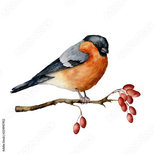 Cuadros en Lienzo Watercolor bullfinch sitting on tree branch with berries