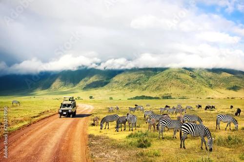 Dzika przyroda Afryki. Zebry na tle gór i chmur. Safari w Parku Narodowym Krateru Ngorongoro. Tanzania.