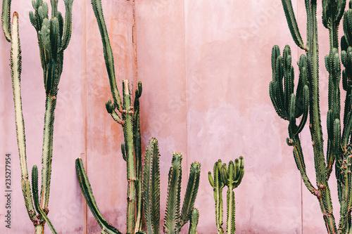 Fototapeta Plants on pink concept