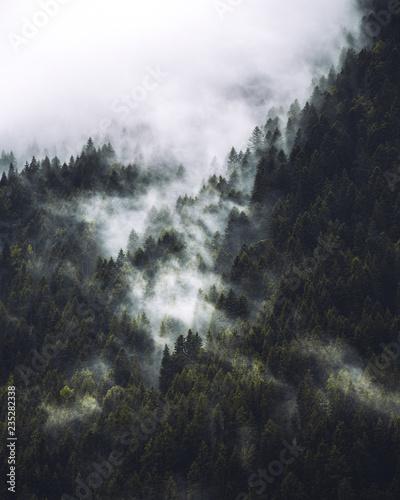 Obraz na płótnie Mgła