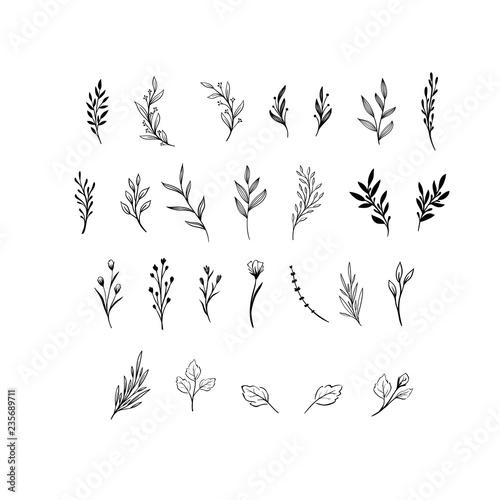 Fotografija Hand drawn floral vector elements