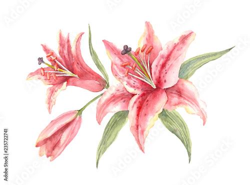 Fotografie, Tablou Bush Pink Stargazer Lilies on a white background.