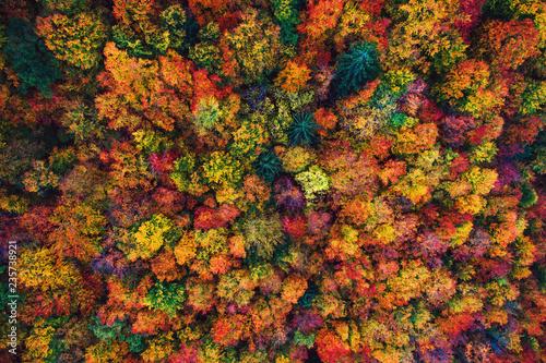 Fototapeta premium Widok z lotu ptaka drone na jesień las. Kolorowe drzewa w drewnie.