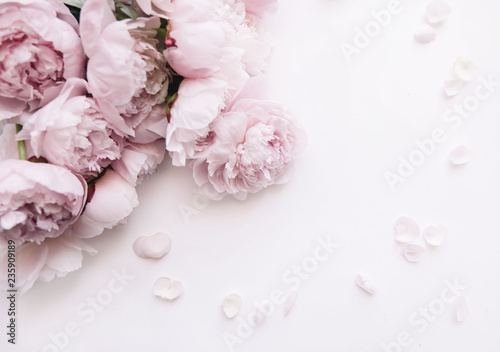 Beautiful, tender fresh blossoming aromatic pink Peony flowers on the white background, top view, flat lay