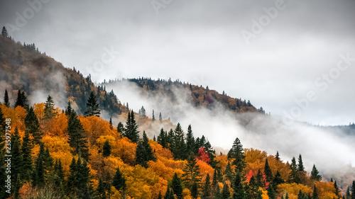 Fototapeta premium Wspaniały kolorowy jesienny dzień w parku rzecznym Jacquesa Cartiera, Quebec, Kanada