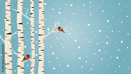 Fotografiet Snowy birch trees and Bullfinches birds, winter vector background