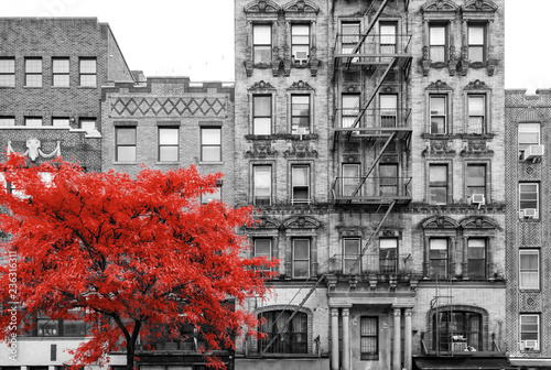 Red tree in black and white street scene in the East Village of Manhattan in ...