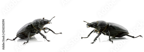 Photographie Black beetles on white background