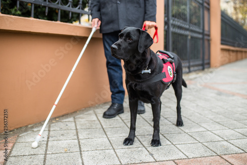 Guide dog helping blind man in the city. Fototapet