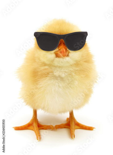 Canvas Print Crazy chick cool with black sunglasses