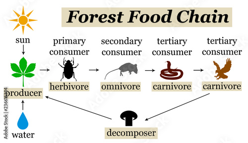 Foto forest food chain
