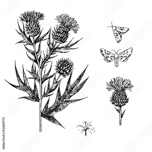 Canvas-taulu Thistle set with branches, flowers and butterflies