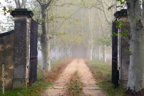 Fotografía Open iron gate on foggy path