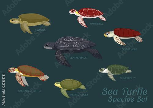 Fototapeta premium Różne gatunki żółwi morskich zestaw ilustracji wektorowych kreskówki