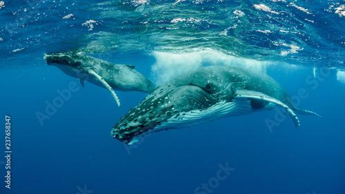 Photo Humpback Whale