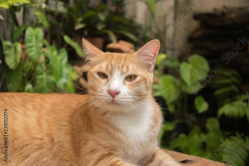 Fototapeta premium Kot w ogrodzie patrzy w górę.