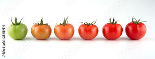 Obraz na plátně Evolution of red tomato isolated on white background