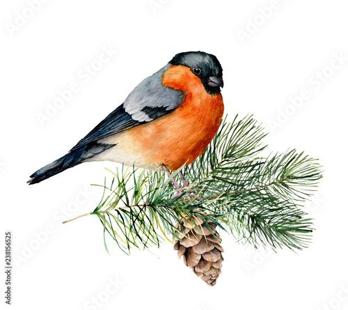 Fotografija Watercolor bullfinch sitting on tree branch with pine cone