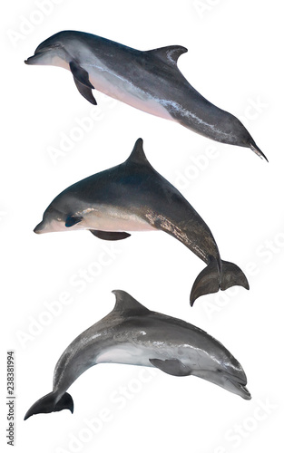 Photographie isolated three grey bottlenose dolphins