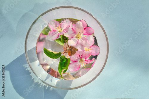 Spring floral frame from pink apple tree blossom in bowl with water