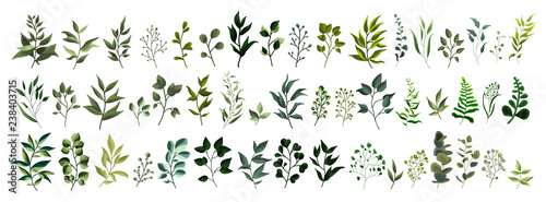 Collection of greenery leaf plant forest herbs tropical leaves