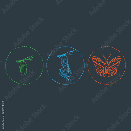 Foto Butterfly and metamorphosis period vector drawing