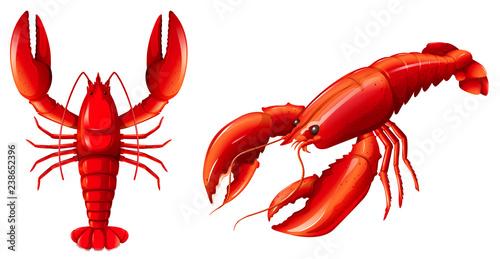 Fotografie, Obraz Set of red lobster
