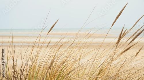 Fotografia Dunes