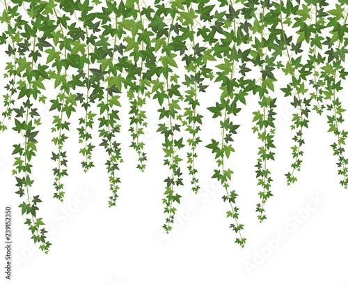 Leinwand Poster Green ivy